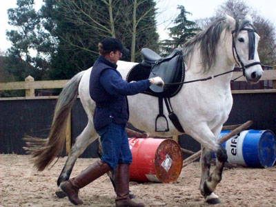 Andalusian Horses - Miquel re-schooling a difficult stallion