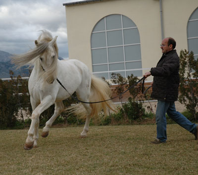 Andalusian Horses - Miquel and Ungido IV